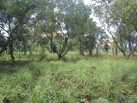 tanah cibubur